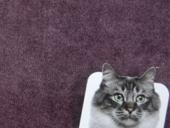 Kat onvriendelijke Meubelstoffen